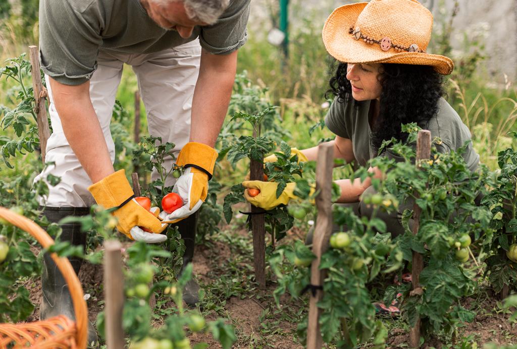 Couple faisant du jardinage